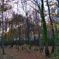 Il bosco esterno